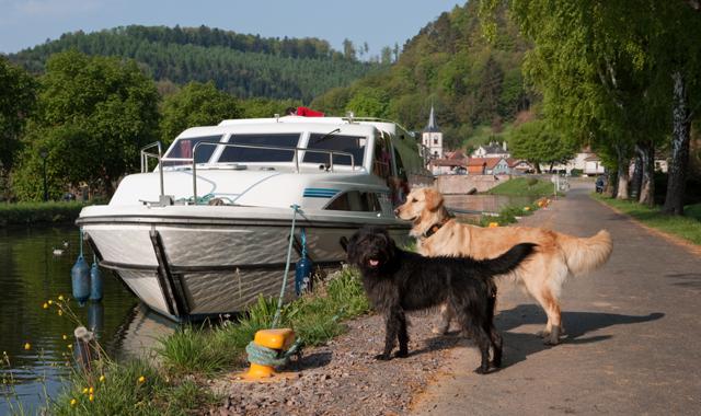 Hund an bord Lutzelbourg