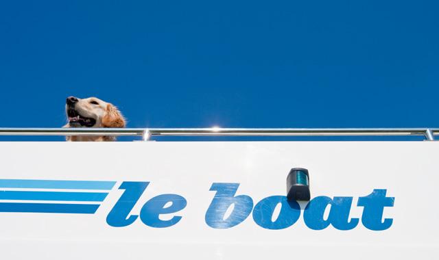 Hund an Bord