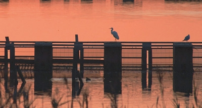 Sonnenuntergang und Vögel