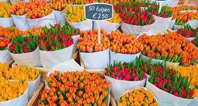 Tulipes sur le marché, Pays-Bas