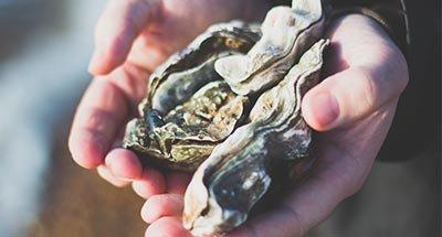 Mann hält Austern