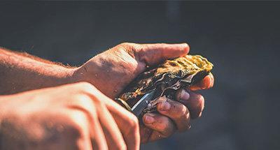 Austern in der Bretagne
