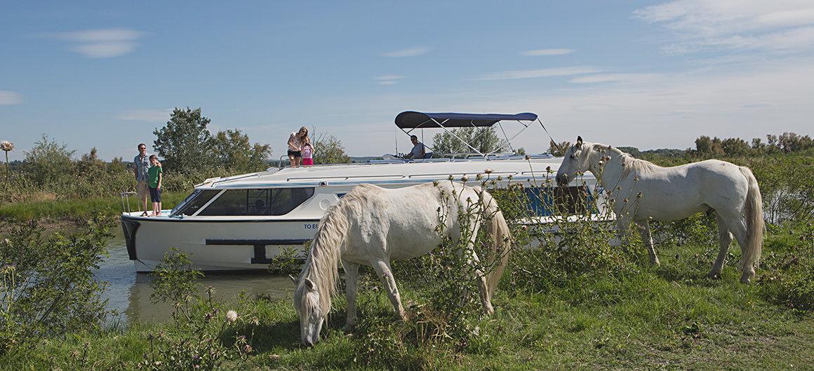 Hausboot Vision und Wildpferde
