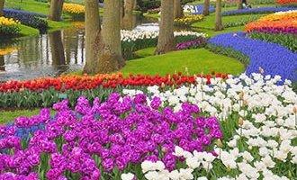 Keukenhof Blumenpark in Lisse